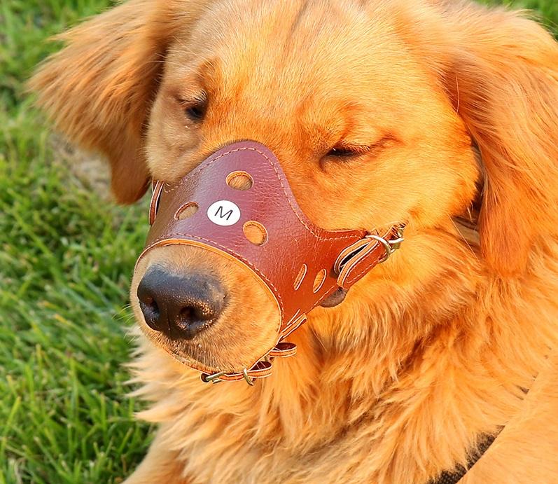 Rọ mõm chó bằng da